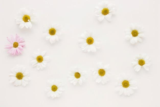 Conjunto de muchos brotes de flor de la margarita Foto gratis