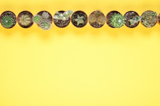Conjunto de pequeños cactus sobre un fondo amarillo. vista superior. Foto Premium