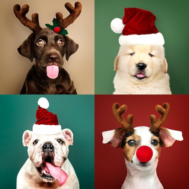 Conjunto de retratos de adorables cachorros con trajes navideños.
