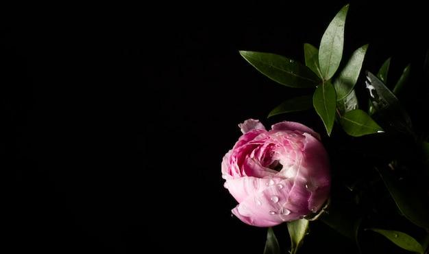 Copia-espacio floreciente rosa rosa Foto gratis