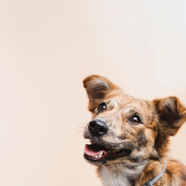 Copia espacio lindo perro mirando a cámara Foto gratis