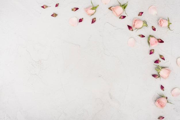 Copia espacio primavera rosa yemas flores Foto gratis