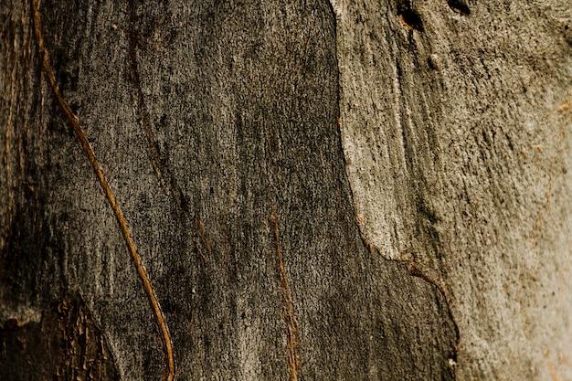 Copia espacio textura de árbol oxidado de madera Foto gratis
