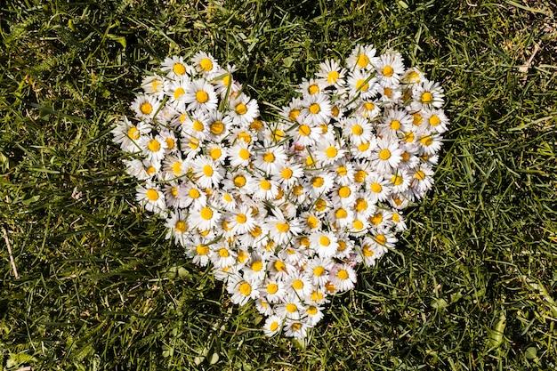 Corazón de margaritas Foto gratis