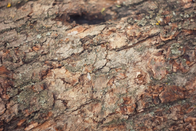 Corteza de árbol con musgo Foto Premium
