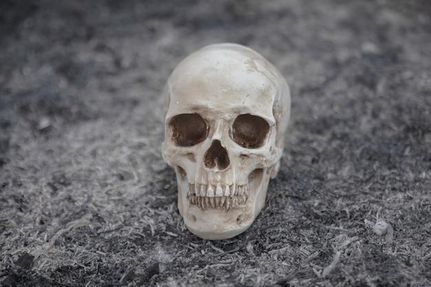 Cráneo de cemento creado para sesiones de fotos Foto gratis