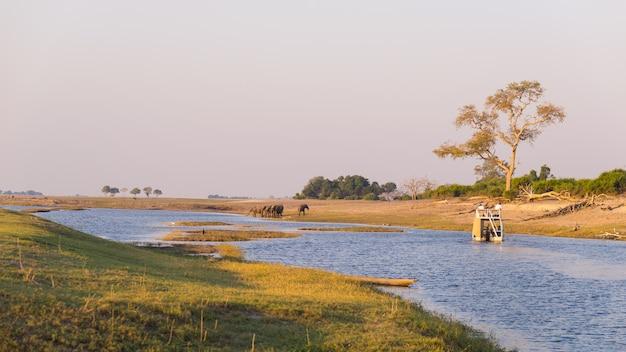 Crucero en barco y safari de vida silvestre en el río chobe, en la frontera de namibia botswana, áfrica. el parque nacional chobe, la famosa reserva wildlilfe y un destino turístico exclusivo. Foto Premium