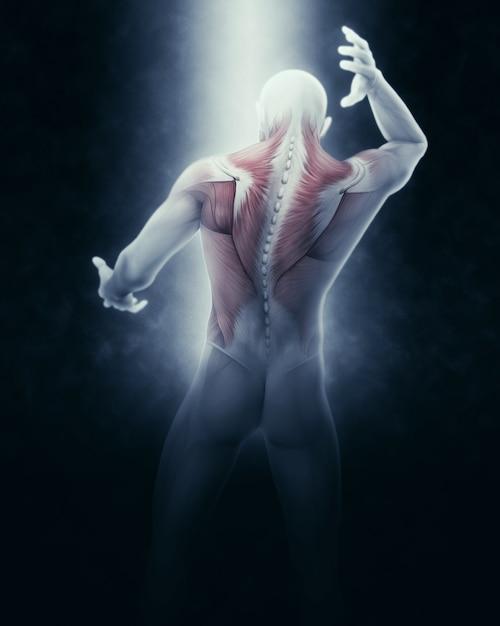 Cuerpo humano con músculos | Descargar Fotos gratis