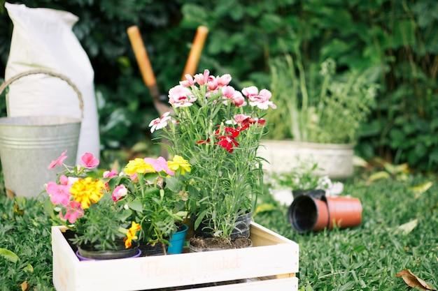 Cultivo de flores en cajas de madera en jardín Foto gratis