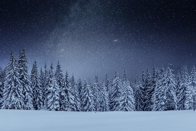 Dairy star trek en el bosque de invierno. escena dramática y pintoresca. en previsión de las vacaciones. ucrania cárpata Foto gratis