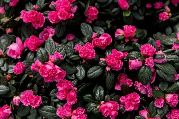 Decoración con hermosas flores rosas Foto gratis
