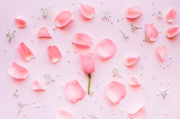 Delicada composición de pétalos de rosa y pequeñas flores blancas sobre un fondo rosa Foto gratis