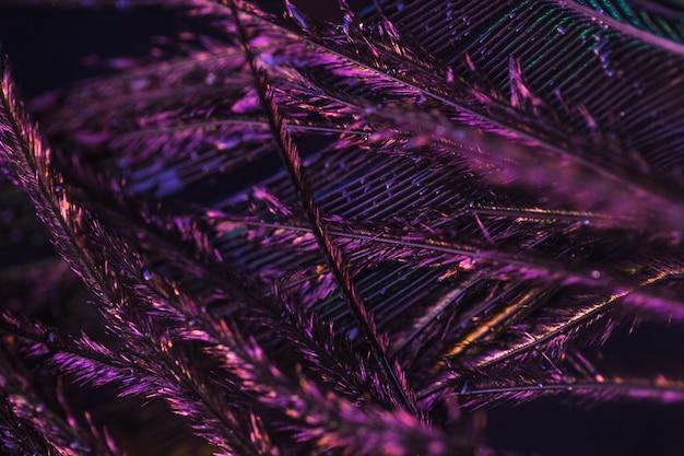 Detalle macro de pluma de pavo real púrpura Foto gratis