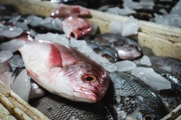 Detalle de pez pargo en un mercado de pescado Foto gratis