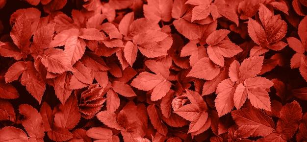 Detalle de plantas tropicales en color coral vivo. Foto Premium