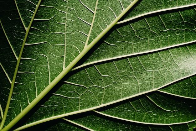 Detalle de primer plano de una hoja de mora iluminada por el sol Foto Premium