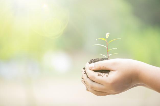 Día de la tierra en manos de árboles que crecen plántulas. mano femenina que sostiene el árbol en hierba del campo de la naturaleza. Foto gratis