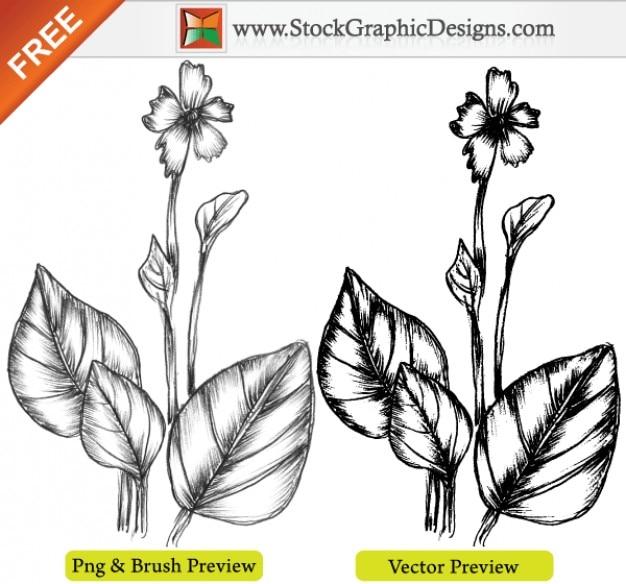 Dibujado a mano la planta Sketchy Imagen vectorial gratis