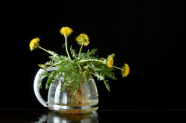 Diente de león con raíces y hojas en una tetera de vidrio en un oscuro Foto Premium