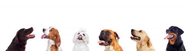 Diferentes perros mirando a cámara Foto Premium