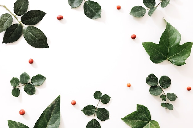 Diferentes tipos de hojas tropicales y frutas de baya en el fondo blanco Foto gratis