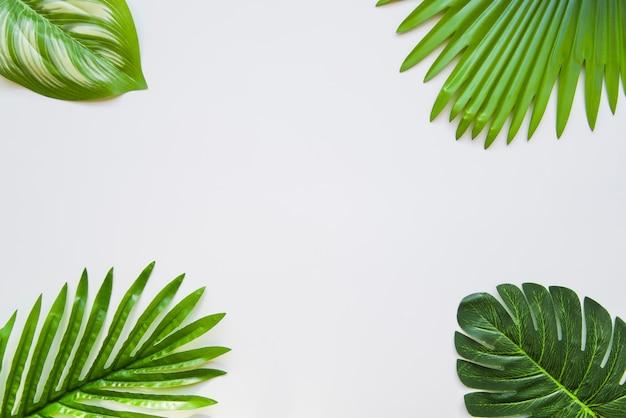 Diferentes tipos de hojas verdes en la esquina del fondo blanco. Foto gratis