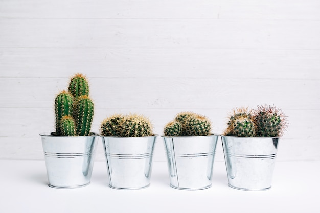 Diferentes tipos de parcelas de plantas suculentas en escritorio blanco Foto gratis