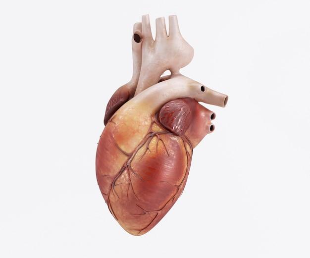 Diseño de corazón humano Foto gratis