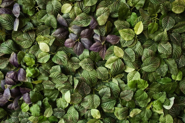 Diseño creativo hecho de hojas verdes. endecha plana. concepto de naturaleza Foto gratis