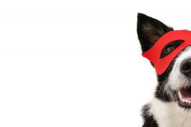 Disfraz de superhéroe de perro de piel de primer plano para carnaval o fiesta de halloween con una máscara roja. Foto Premium