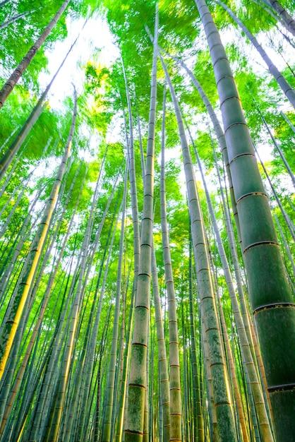 Disparar japonés belleza brillante arboleda Foto gratis