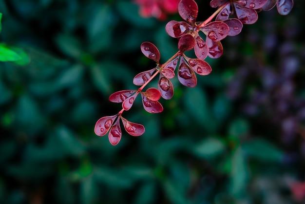 Disparo de enfoque selectivo de hojas coloridas cubiertas de rocío Foto gratis