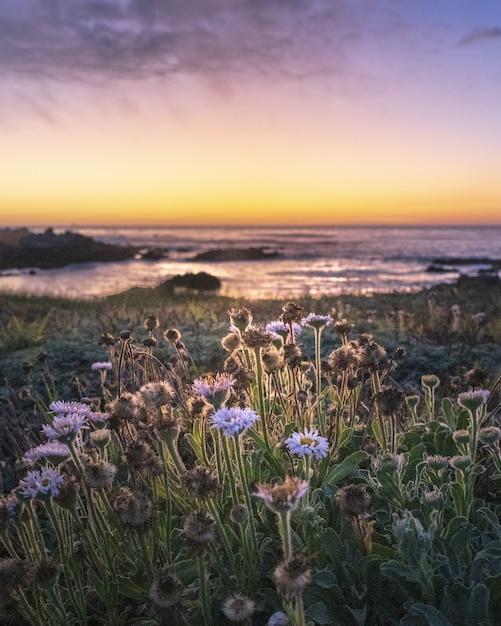 Disparo de enfoque selectivo vertical de flores de campo durante la puesta de sol Foto gratis