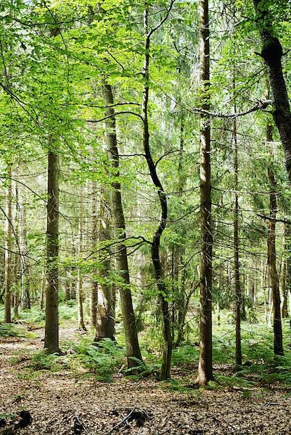 Disparo vertical de los altos árboles que crecen en el bosque durante el día Foto gratis
