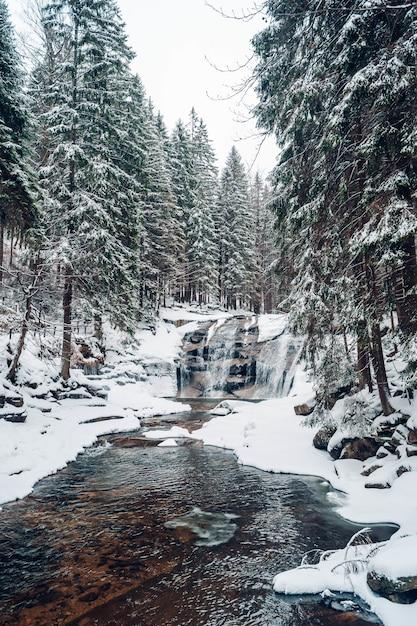 Disparo vertical de un bosque con árboles altos cubiertos de nieve Foto gratis