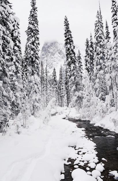 Disparo vertical del bosque de pinos cubierto de nieve en invierno Foto gratis