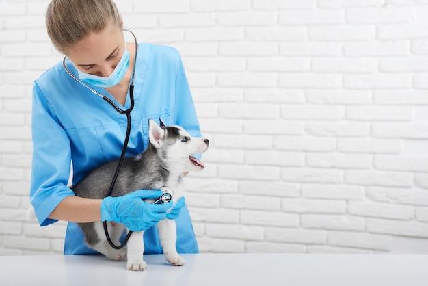 Disparo de un veterinario femenino profesional que trabaja en su consultorio médico Foto Premium