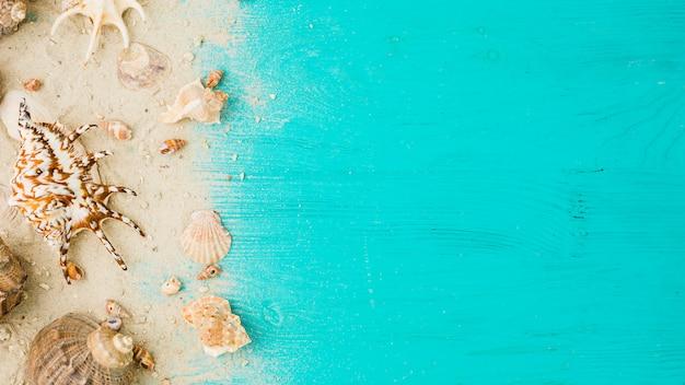 Disposición de conchas marinas entre la arena a bordo. Foto gratis
