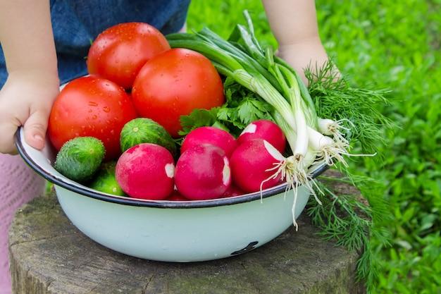 Diversas verduras de cosecha propia en el fondo de madera blanco. enfoque selectivo Foto Premium