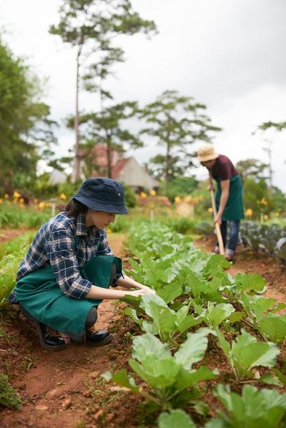 Dos agricultores cultivando plantas en el huerto Foto gratis