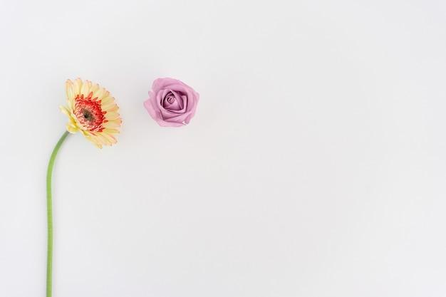 Dos Flores Sobre Fondo Blanco