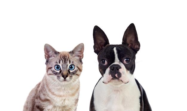 Dos hermosas mascotas posando Foto Premium