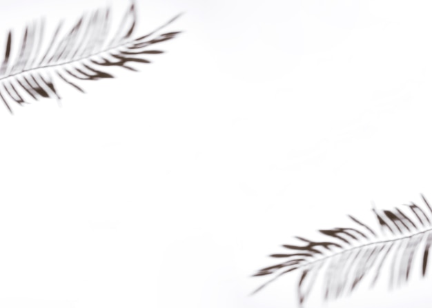 Dos hojas de palma sobre fondo blanco Foto gratis