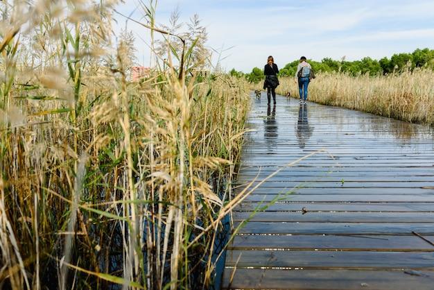 Dos mujeres pasean a sus perros en la pasarela de madera de un lago. Foto Premium