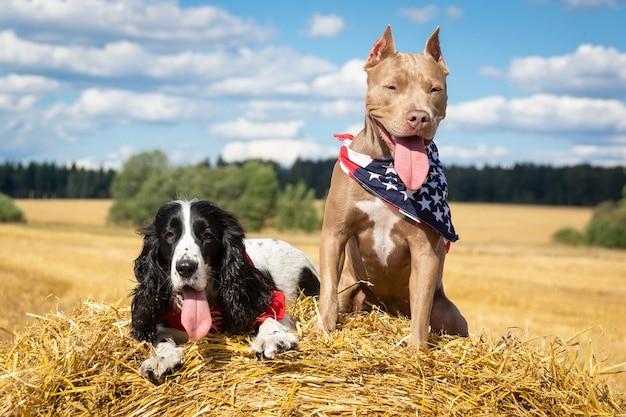 Dos perros en un pajar Foto Premium