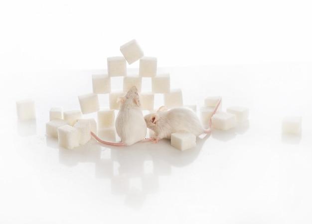 azúcar diabetes vista gracioso