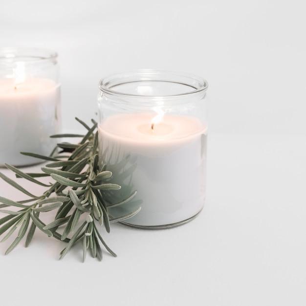 Dos velas encendidas en candelabros de cristal con planta. Foto gratis