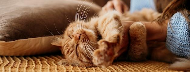 Dueño acariciando adorable gato Foto gratis