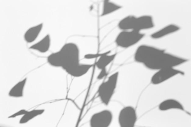 Efecto de superposición de sombras. sombras de hojas de árboles y ramas tropicales en una pared blanca a la luz del sol. Foto Premium