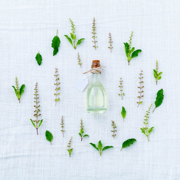 El círculo de la flor fresca de la albahaca santa y hojas en el ...